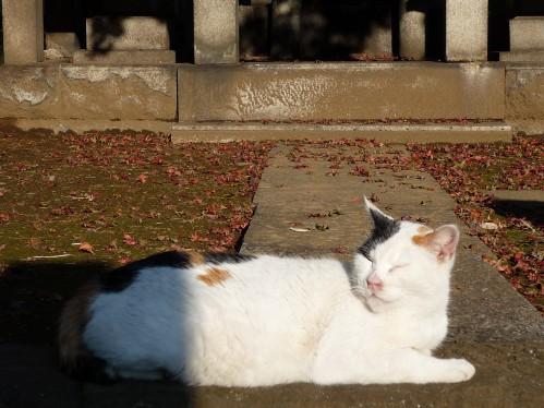 東京閒情:躺在墓園曬太陽
